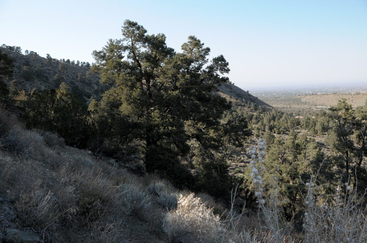 Wrightwood CA Land for Sale San Bernardino County | Land4Asset